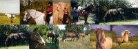 Sybille Freund - Pferdefreund Pferdegestützte Therapie und Reitunterricht